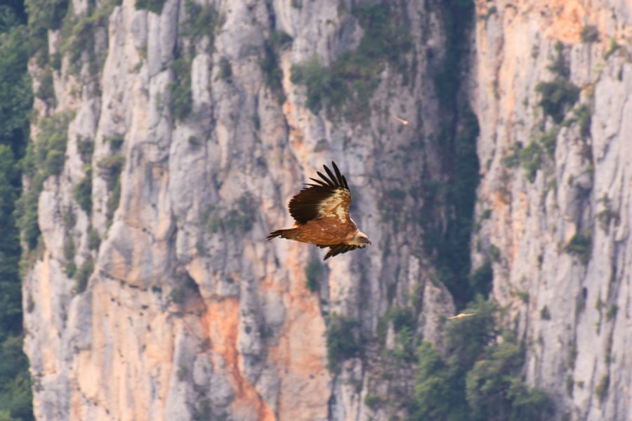 Flying in the Gorges