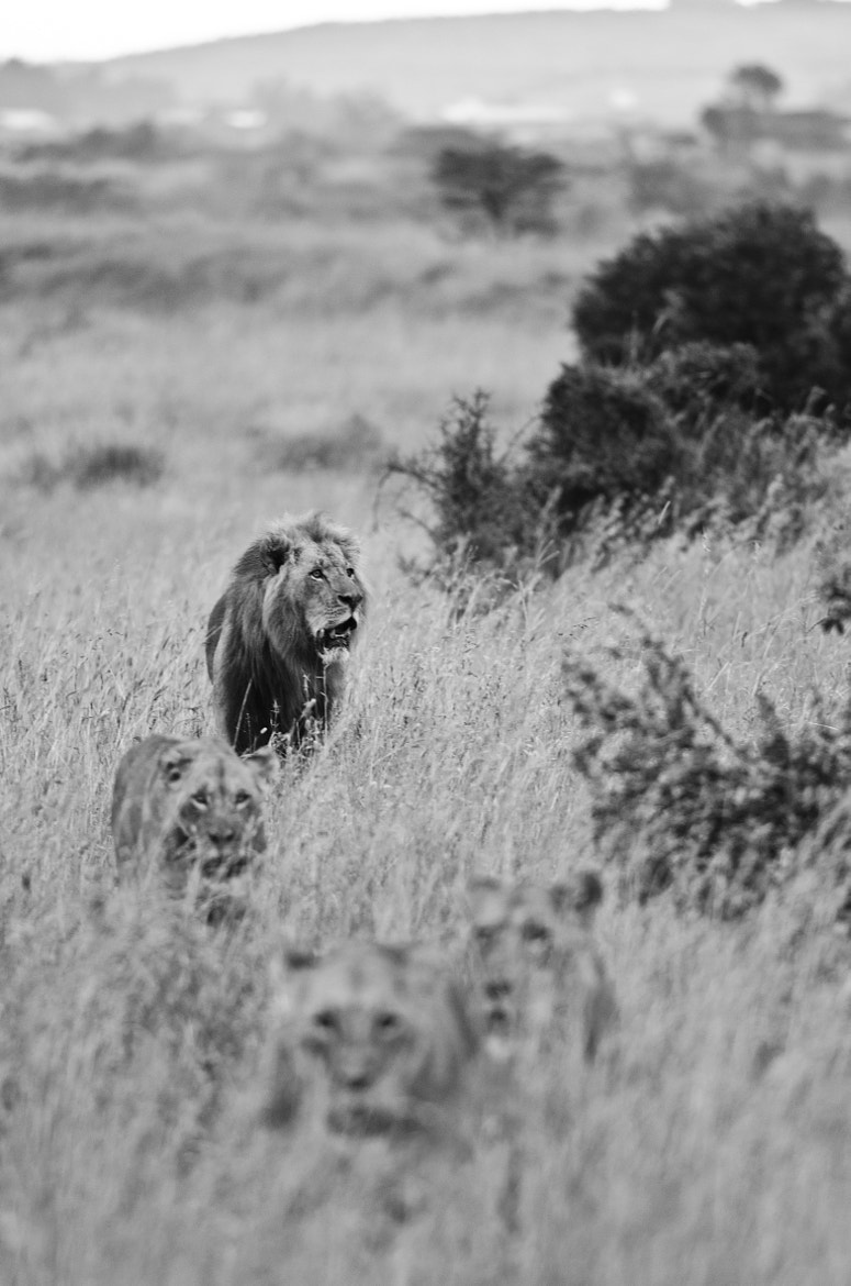 Photograph The Pride by Luke Millward on 500px