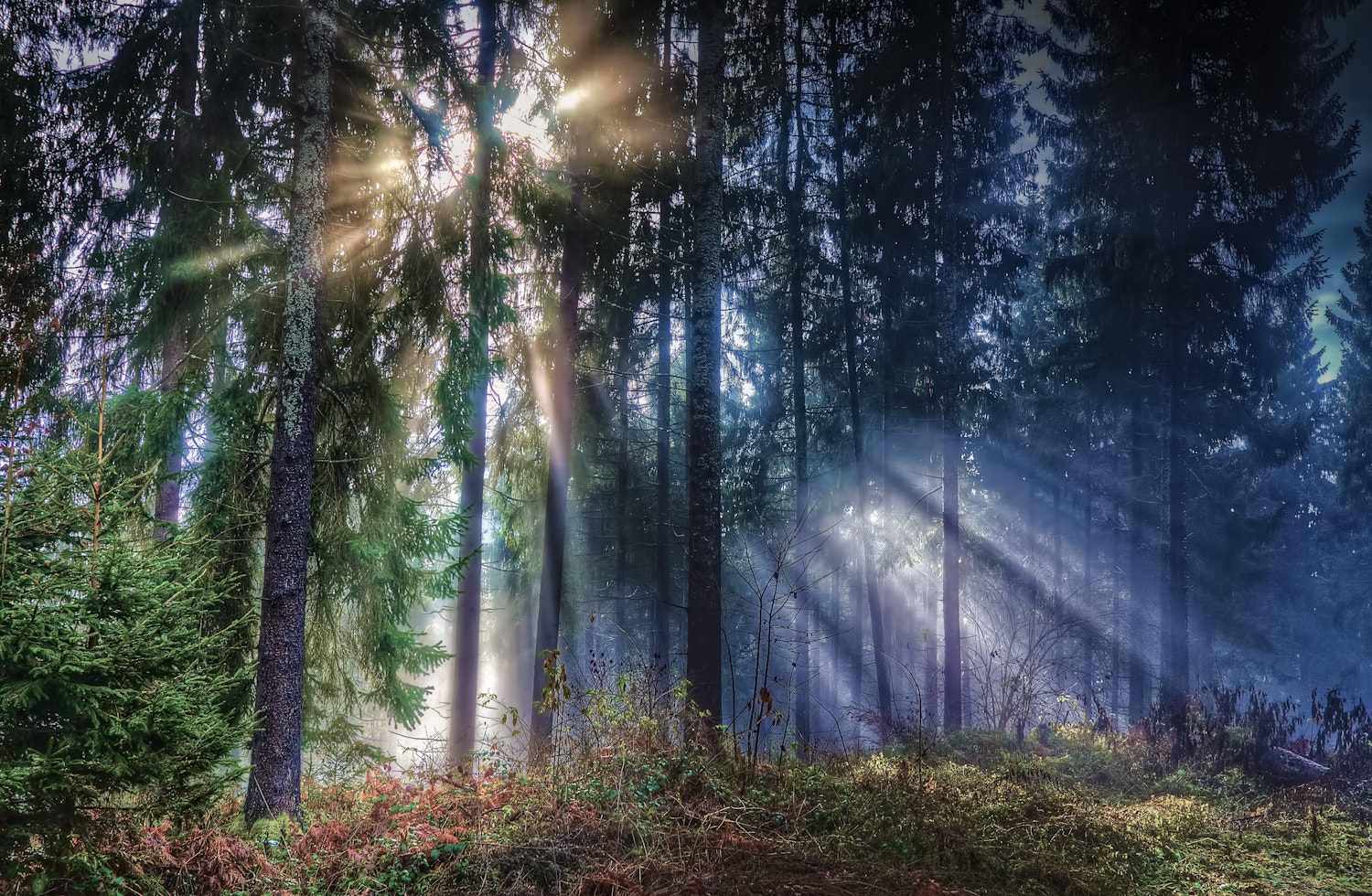 Photograph forest by Paul Werner Suess on 500px