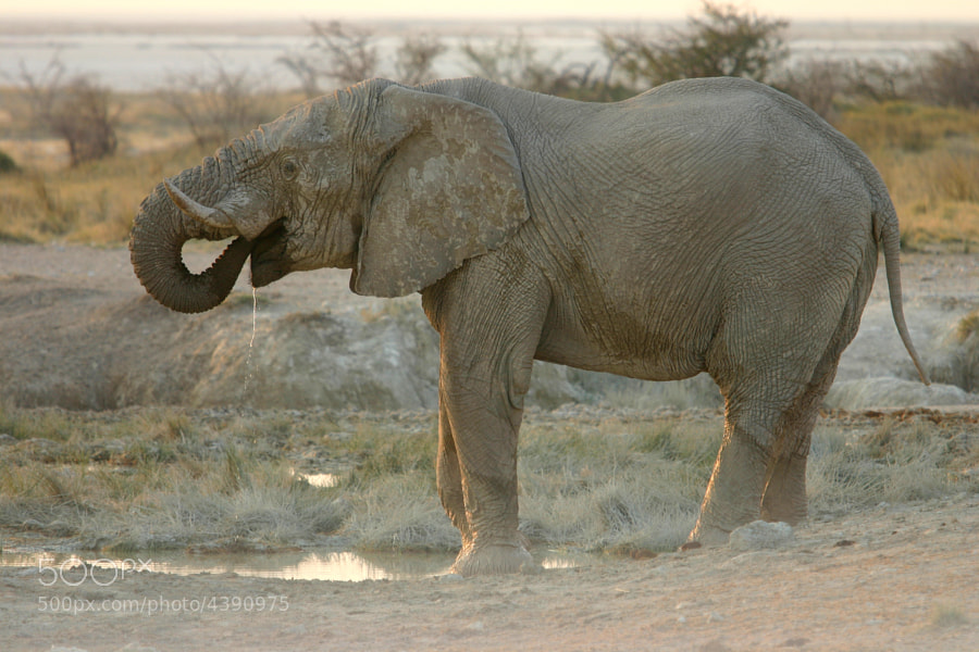 Photograph Water for Elephants by Paul Garrett on 500px