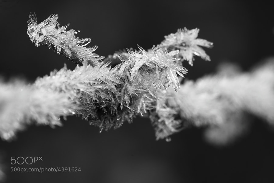 Photograph Frost Wire by Luke Massey on 500px