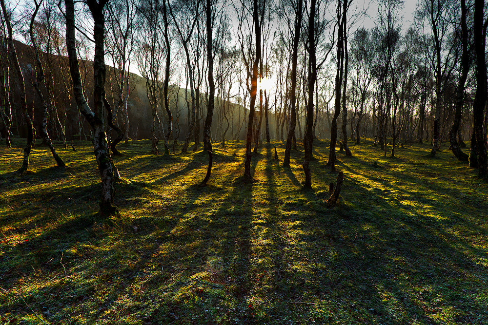 Photograph Trees by Ian Coles on 500px