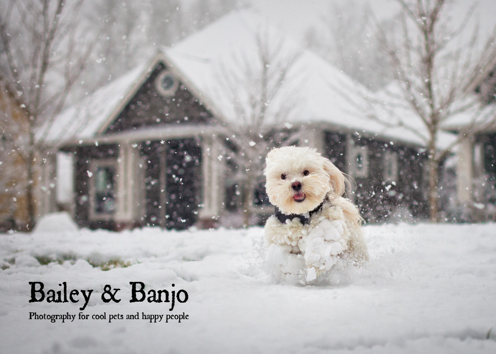 Photograph Kuba the snow dog by Julie Clegg on 500px