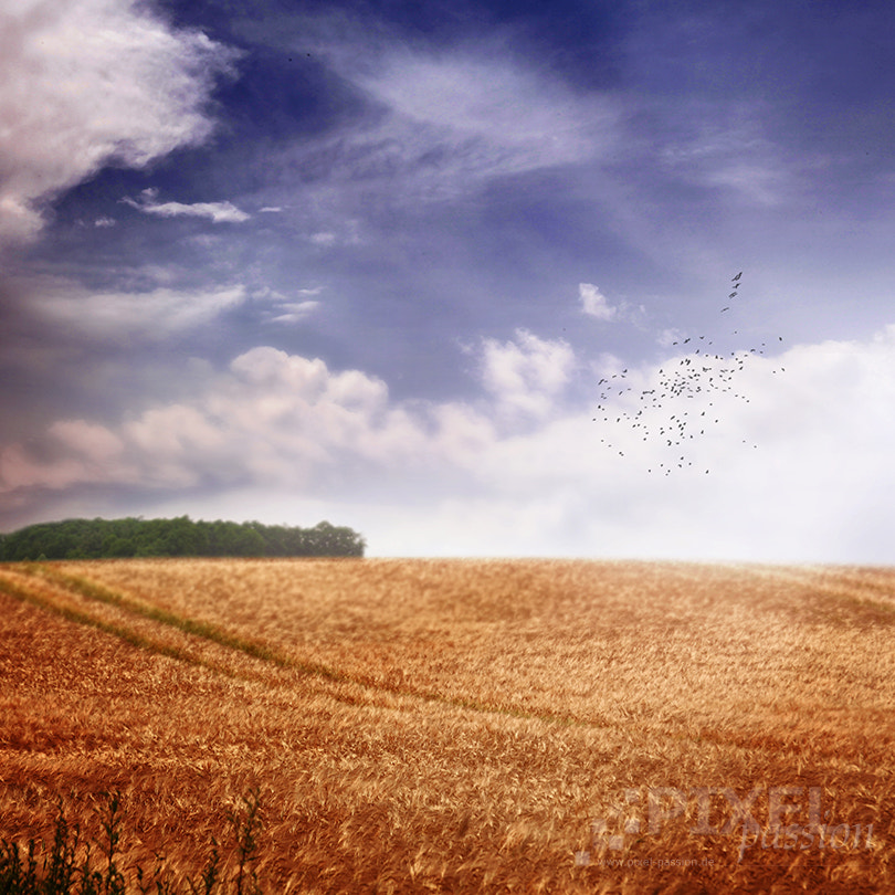 Photograph one late summer day by Pixel Passion on 500px