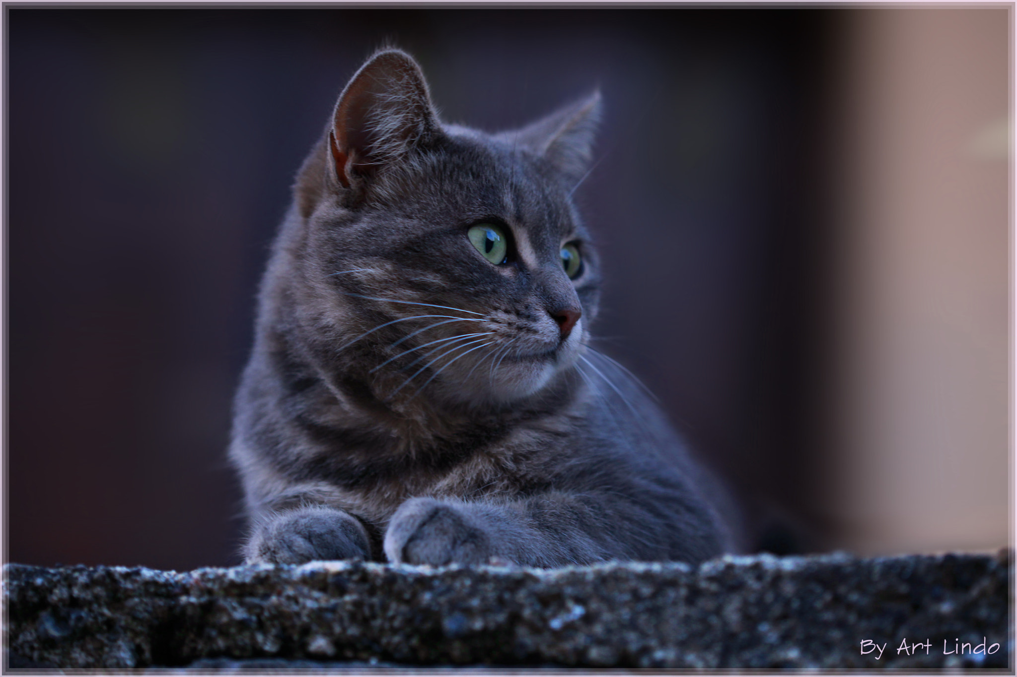 Photograph Le chat du voisin by Art Lindo on 500px