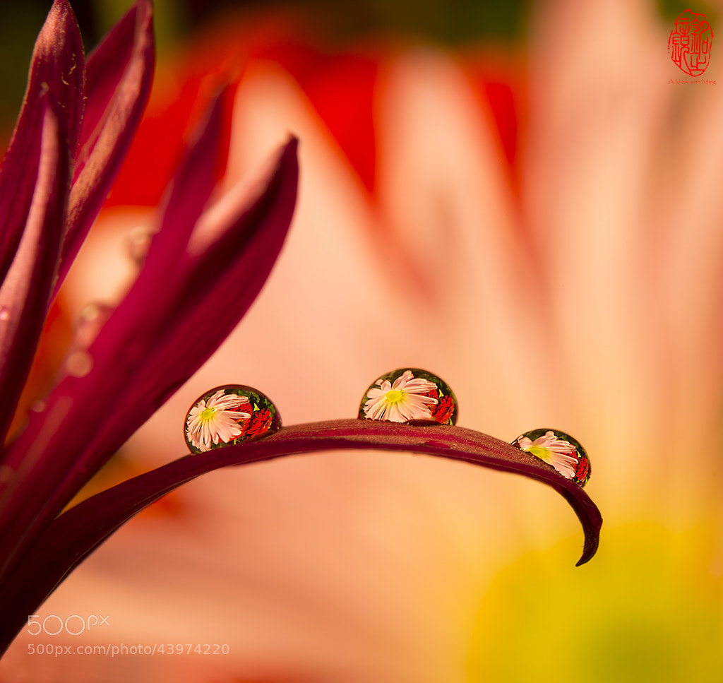 Photograph Drops of Beauty by Ming Gullo on 500px