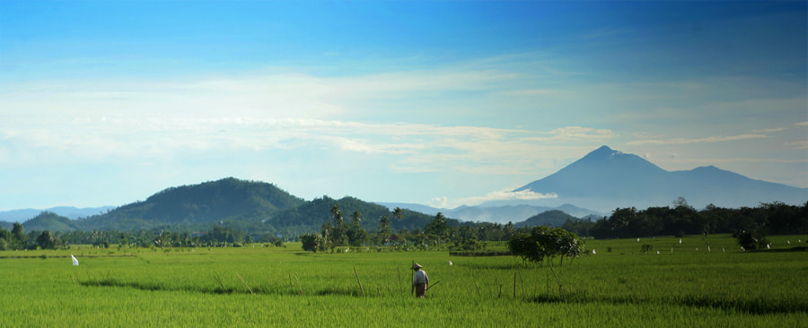 Photograph Gading Rejo with Tanggamus Mountain by Andrew Teng on 500px