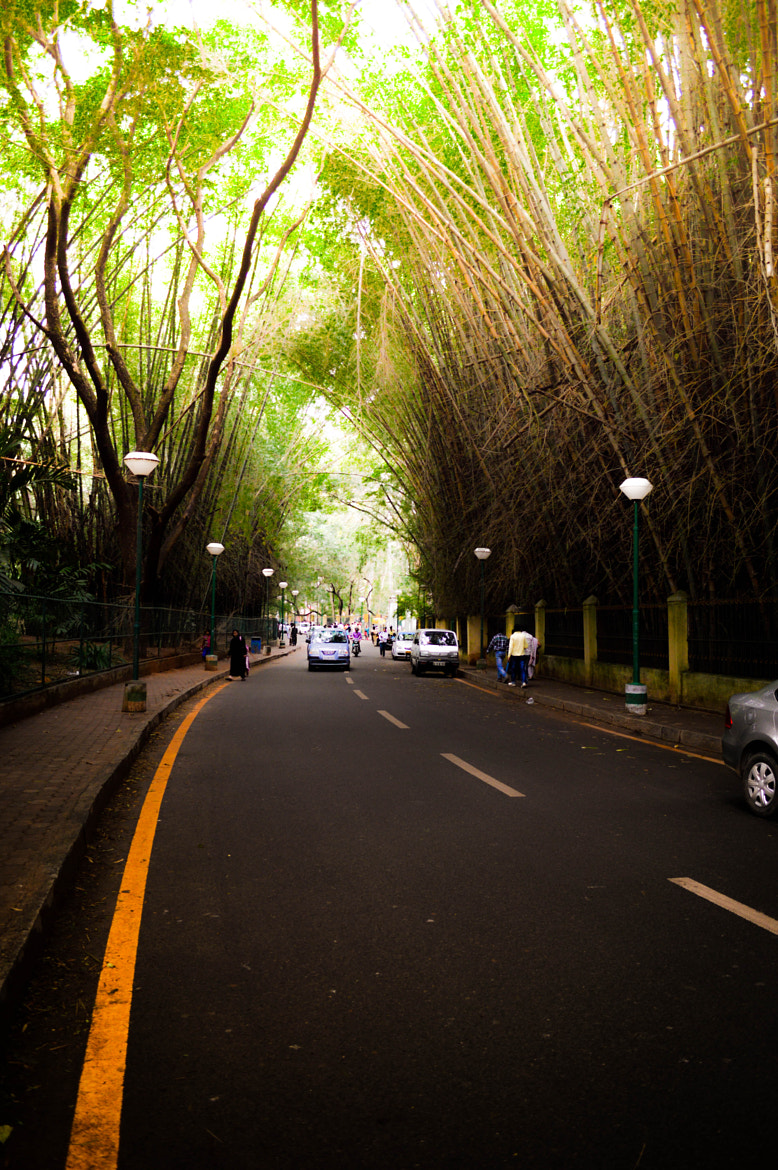 Photograph bangalore kaban park road by sajan Laks on 500px