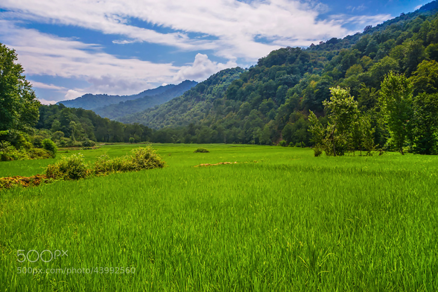 Photograph ~Green & Blue~ by S'Mojtaba Hosaini on 500px