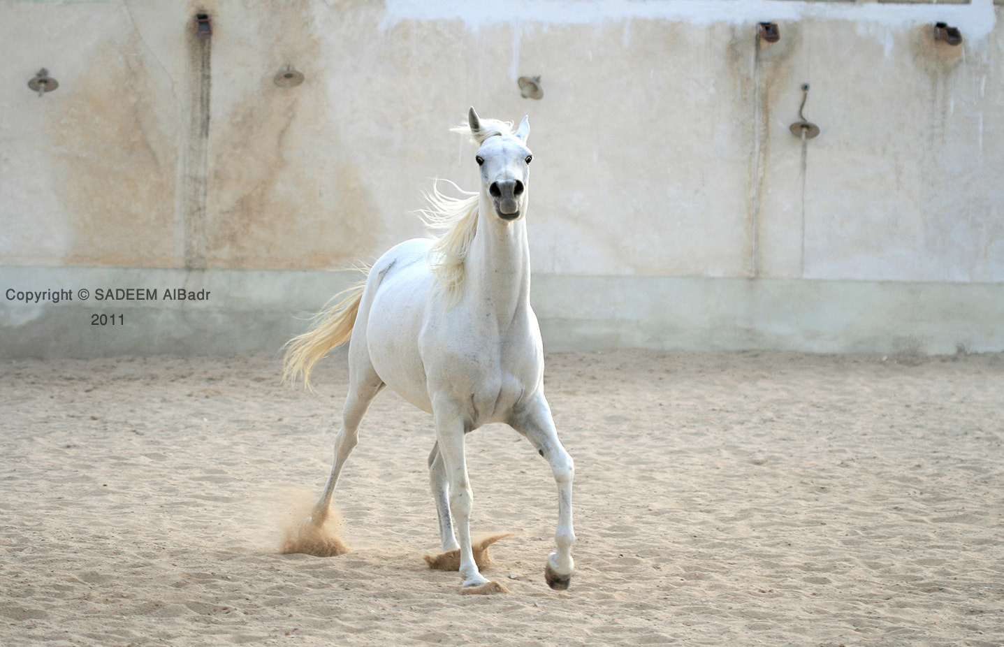 Photograph THE WHITE HORSE .. by SADEEM ALBadr on 500px