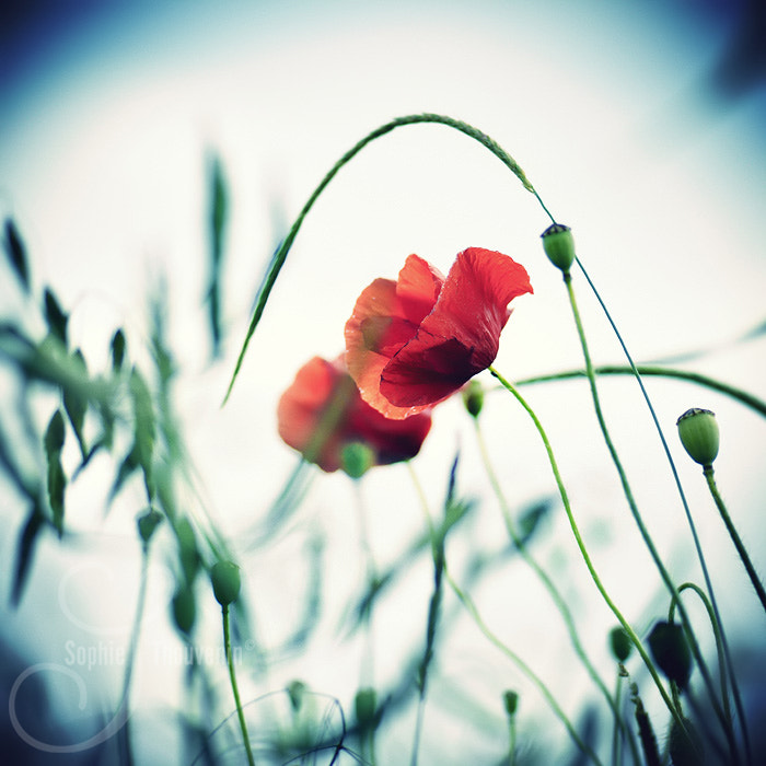 Photograph summer by sophie thouvenin on 500px