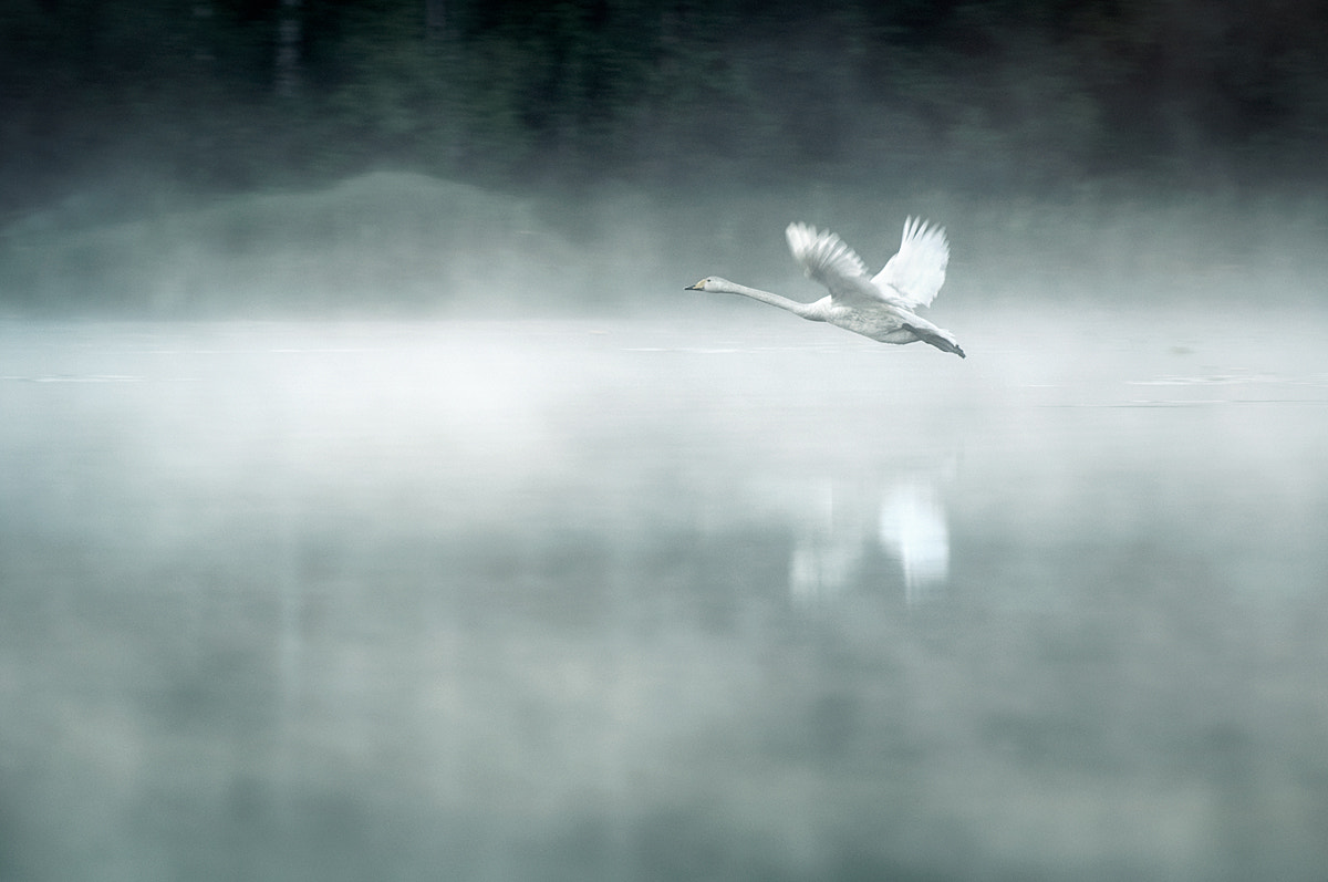 Photograph Morning Flight by Mikko Lagerstedt on 500px