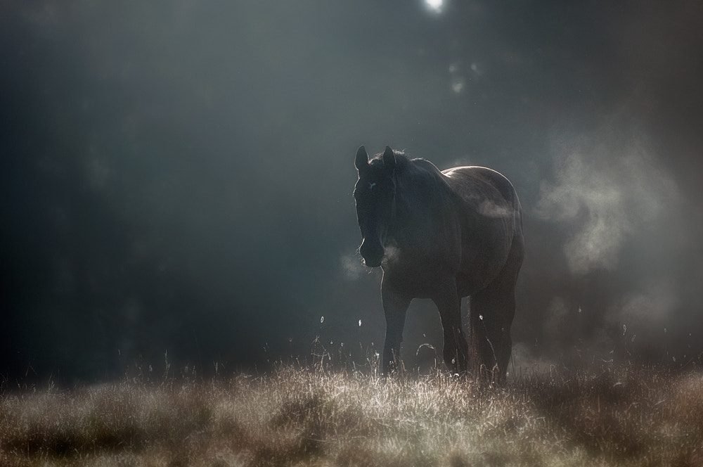 Photograph Morning Light by Mikko Lagerstedt on 500px