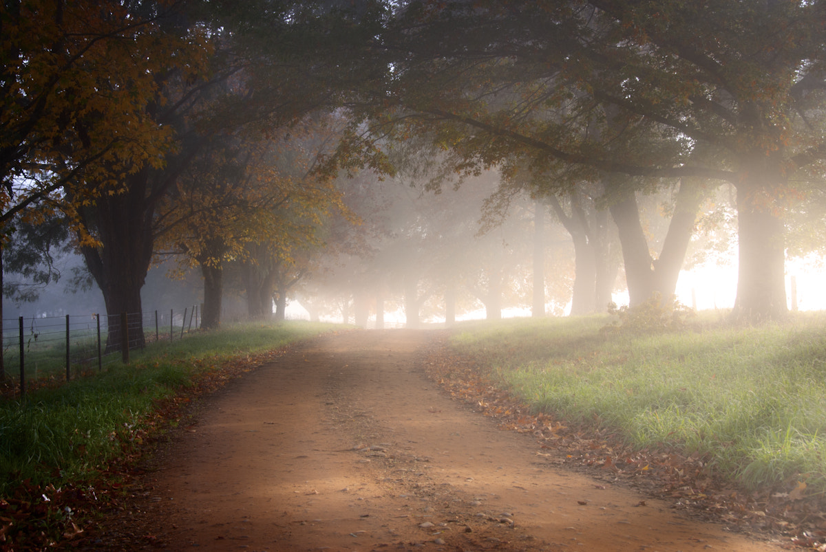 Photograph Autumn avenue by Nathan Kaso on 500px