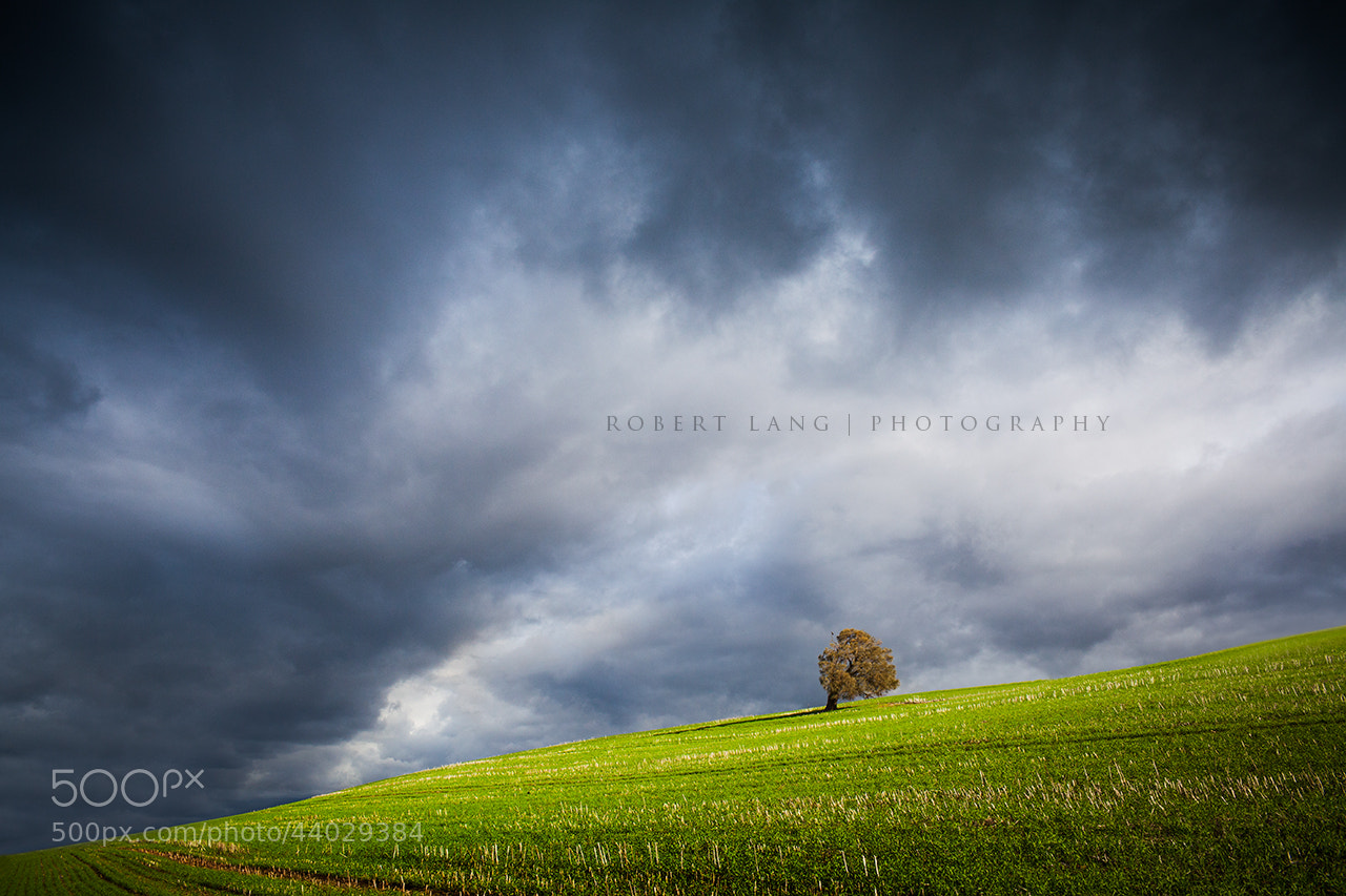 Photograph Tree on green hill, stormy skies - Australia by Robert Lang on 500px