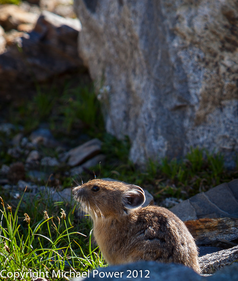 Photograph Enjoying a sunny day by Michael Power on 500px