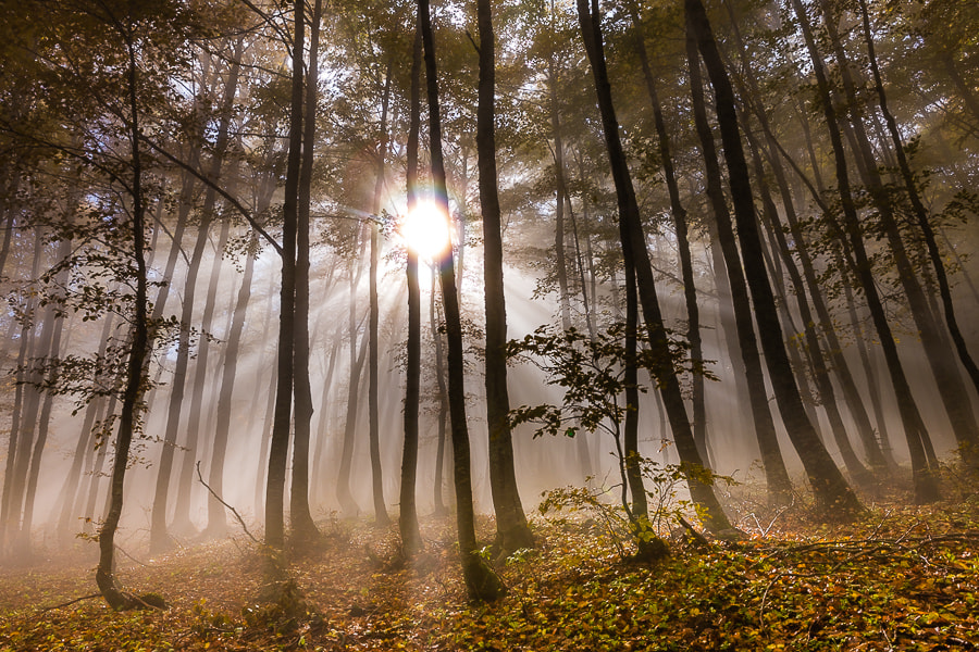 Photograph Sunlight in the woods of Abruzzo by Hans Kruse on 500px