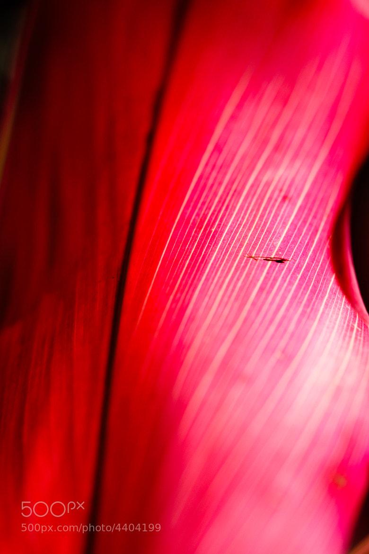 Photograph La vie en rose... by menilmonde by Claire Lopez on 500px