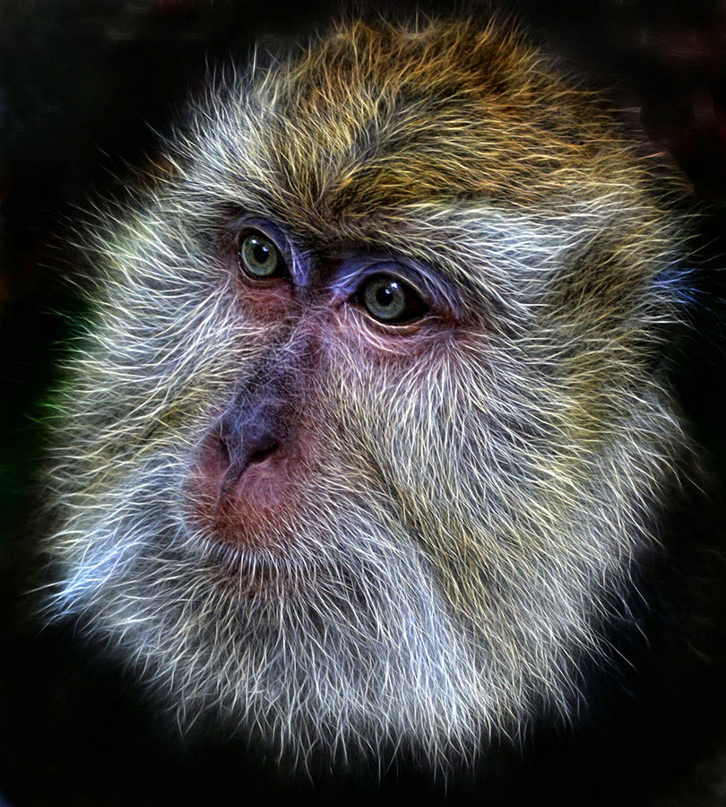 Photograph Monkey Mask by Fabianus Hendrawan on 500px