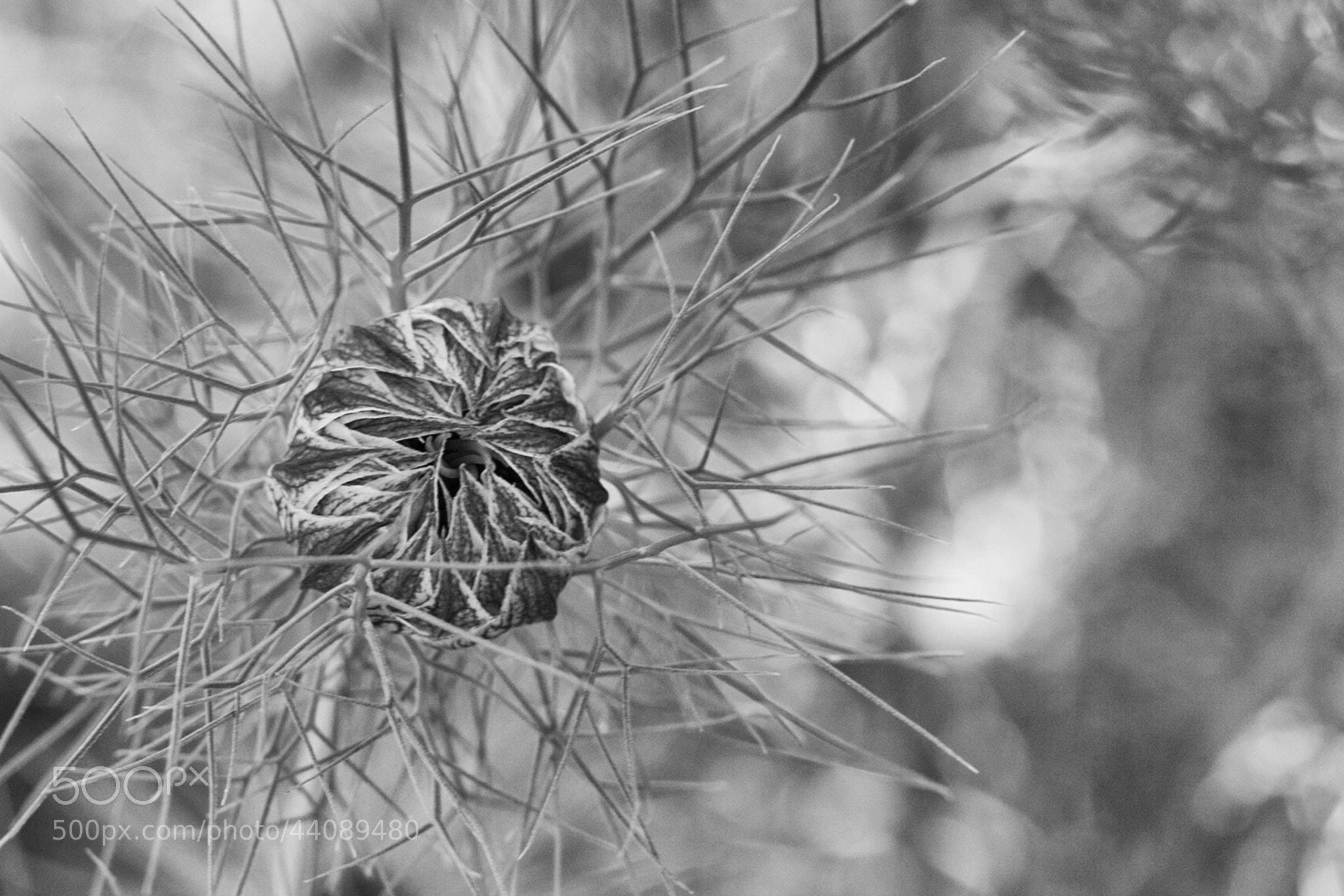 Photograph Garden Alien by Carl Mickleburgh on 500px
