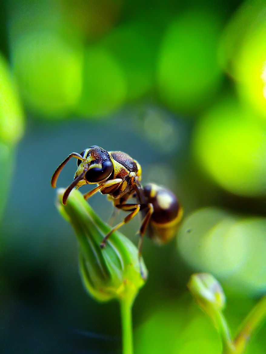 Photograph little wasp by Hendrata Yoga Surya  on 500px