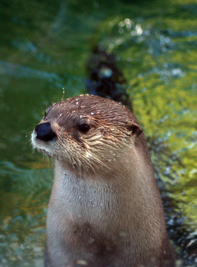 there otter be a law