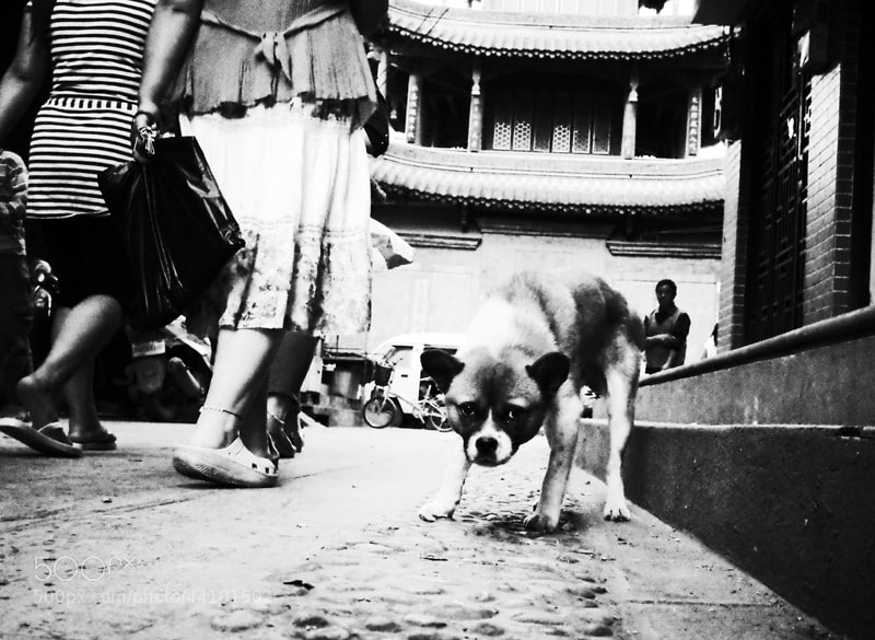Photograph A dog in The Guandu Old Town by Zhu RenYan on 500px