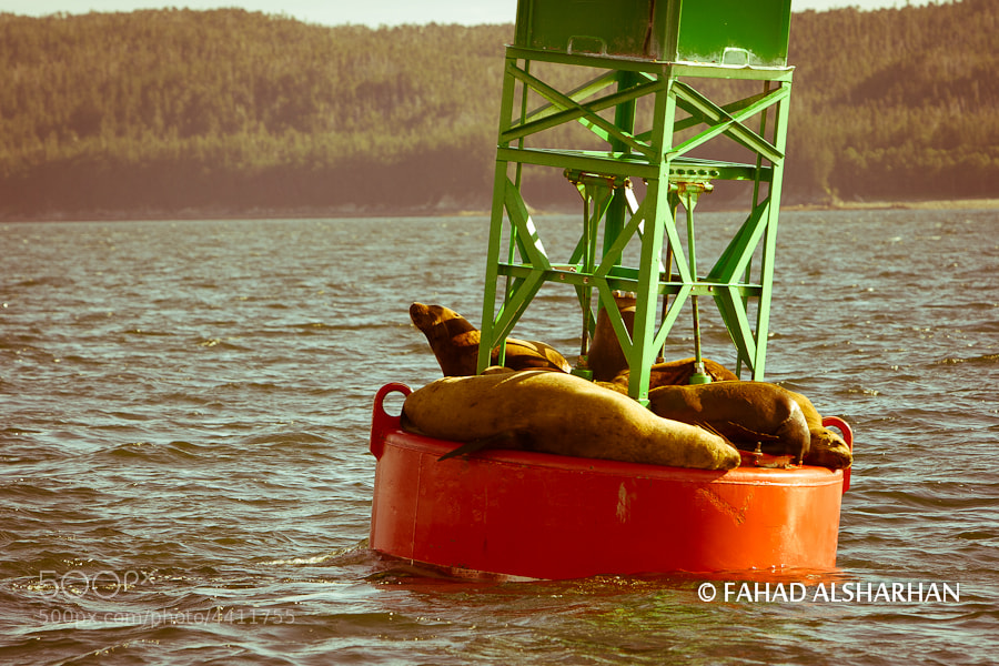 Seals soak up the sun on a buoy in Juneau, Alaska.