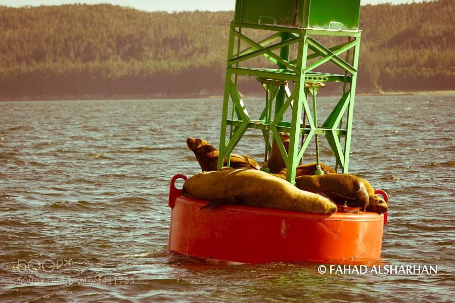 Seals soak up the sun on a buoy in Juneau, Alaska.