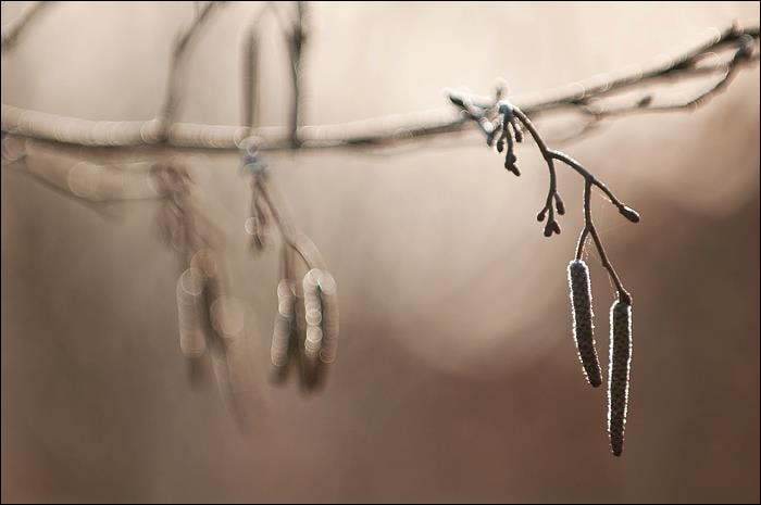 Photograph Catkins by Marc Schager on 500px
