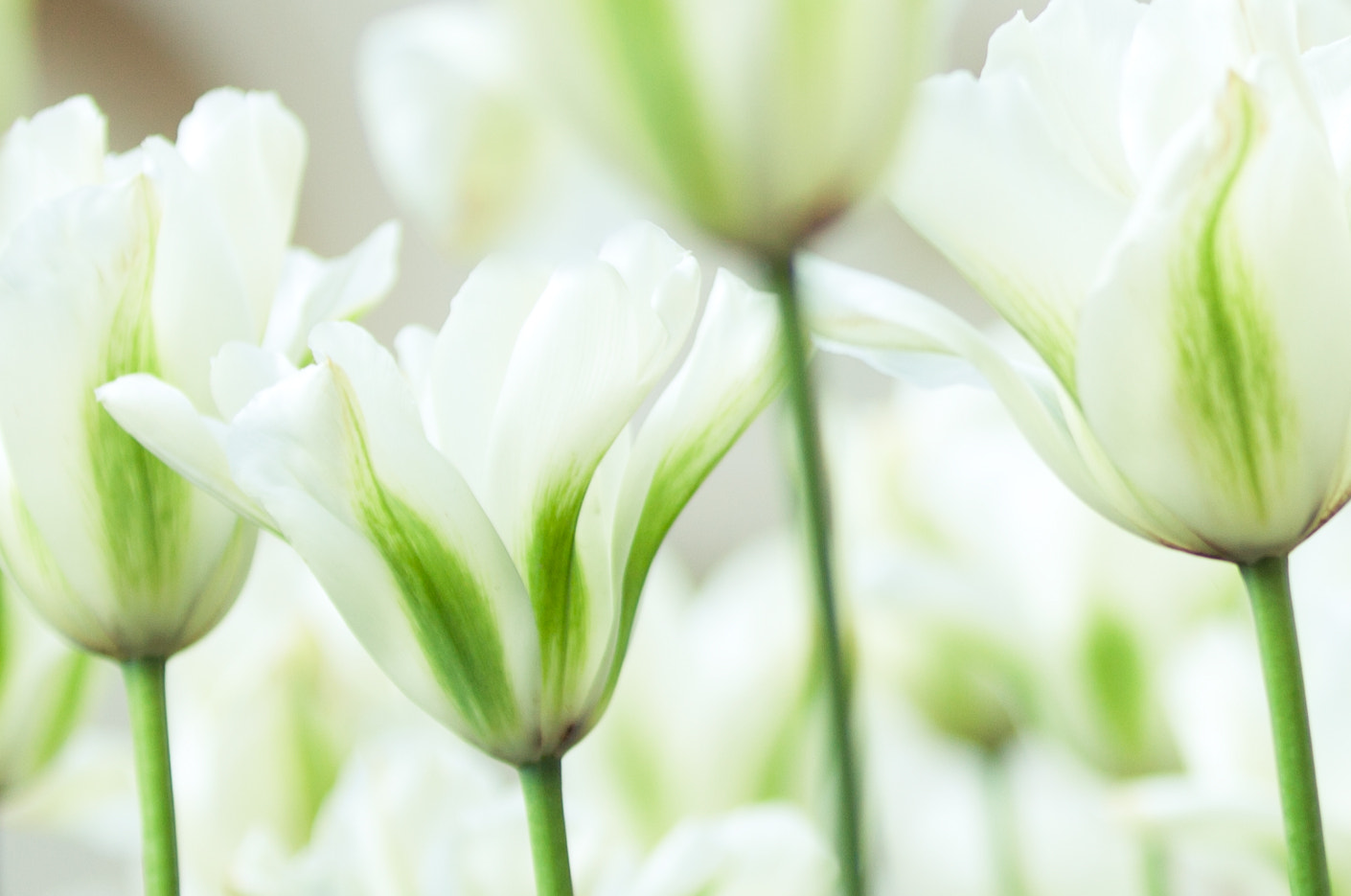 Photograph Flowers by Magdalena Jessica Krynicka on 500px