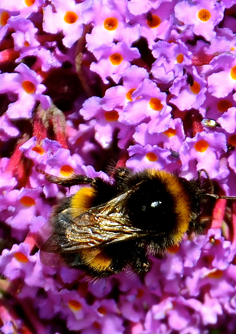 Photograph busy bee by tony martin on 500px