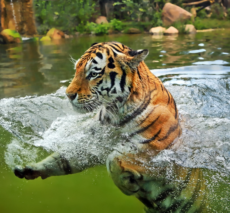 Photograph Front crawl by Klaus Wiese on 500px