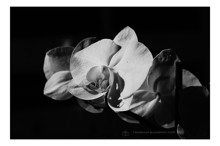 Photograph orchidea  by Joanna Redesiuk on 500px