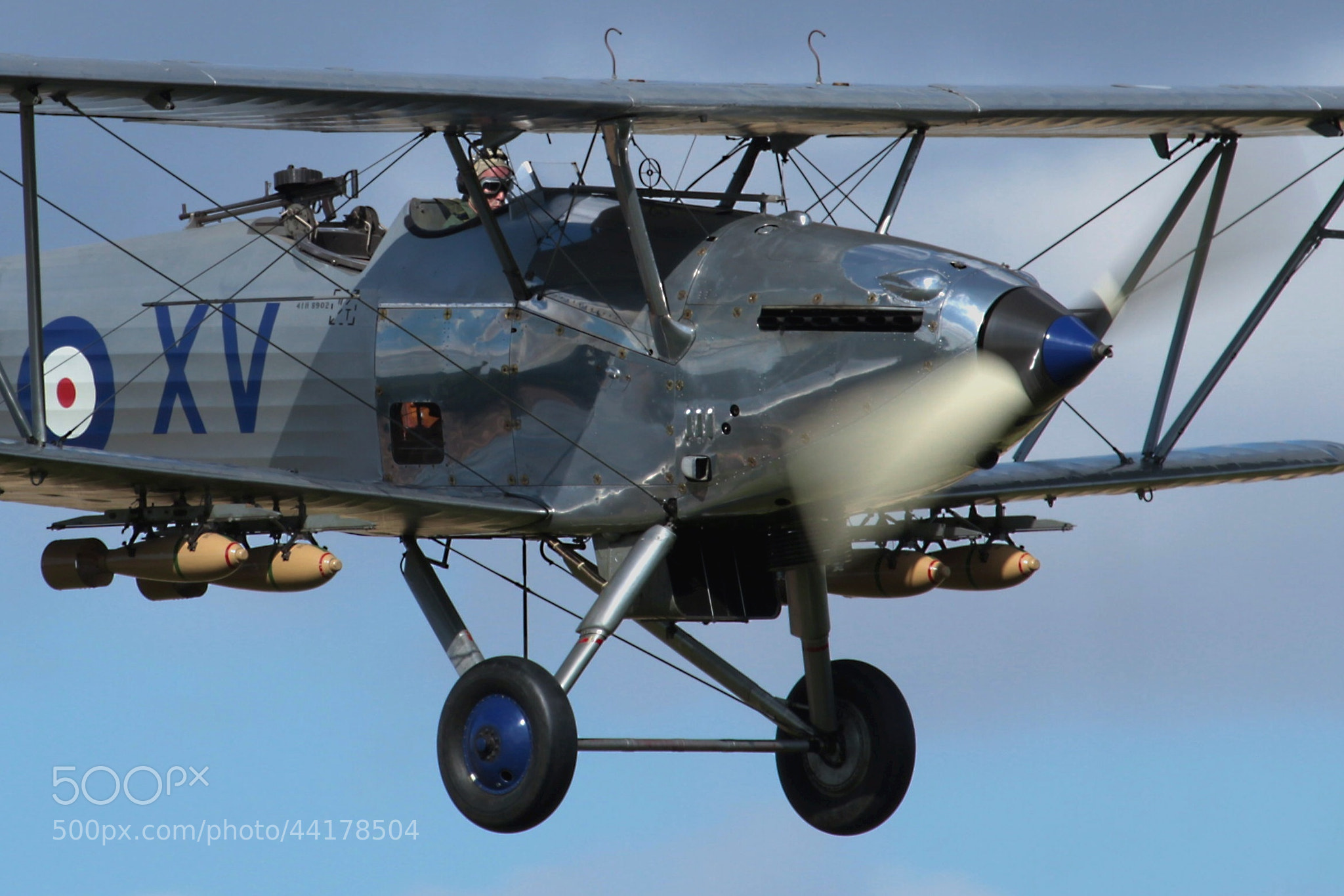 Photograph Hawker Hind  close up by Ian Porter on 500px