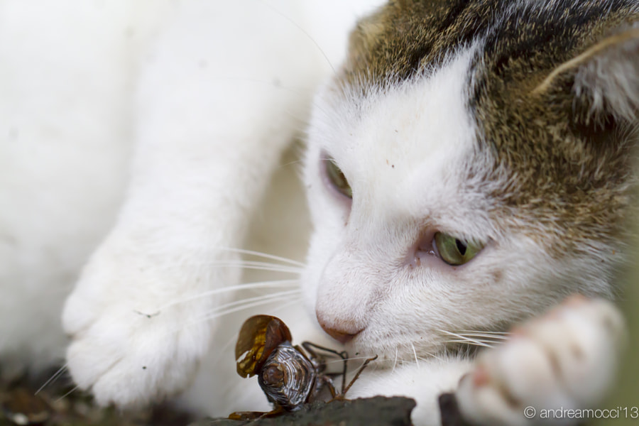 Cat and Cicada (猫と蝉) by Andrea Mocci on 500px.com