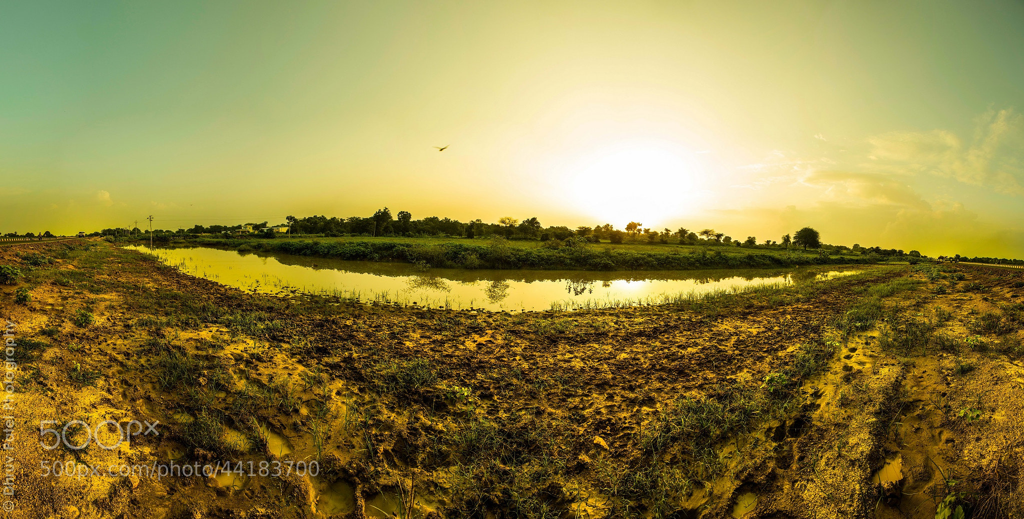 Photograph Roadside Nature by Dhruv Patel on 500px