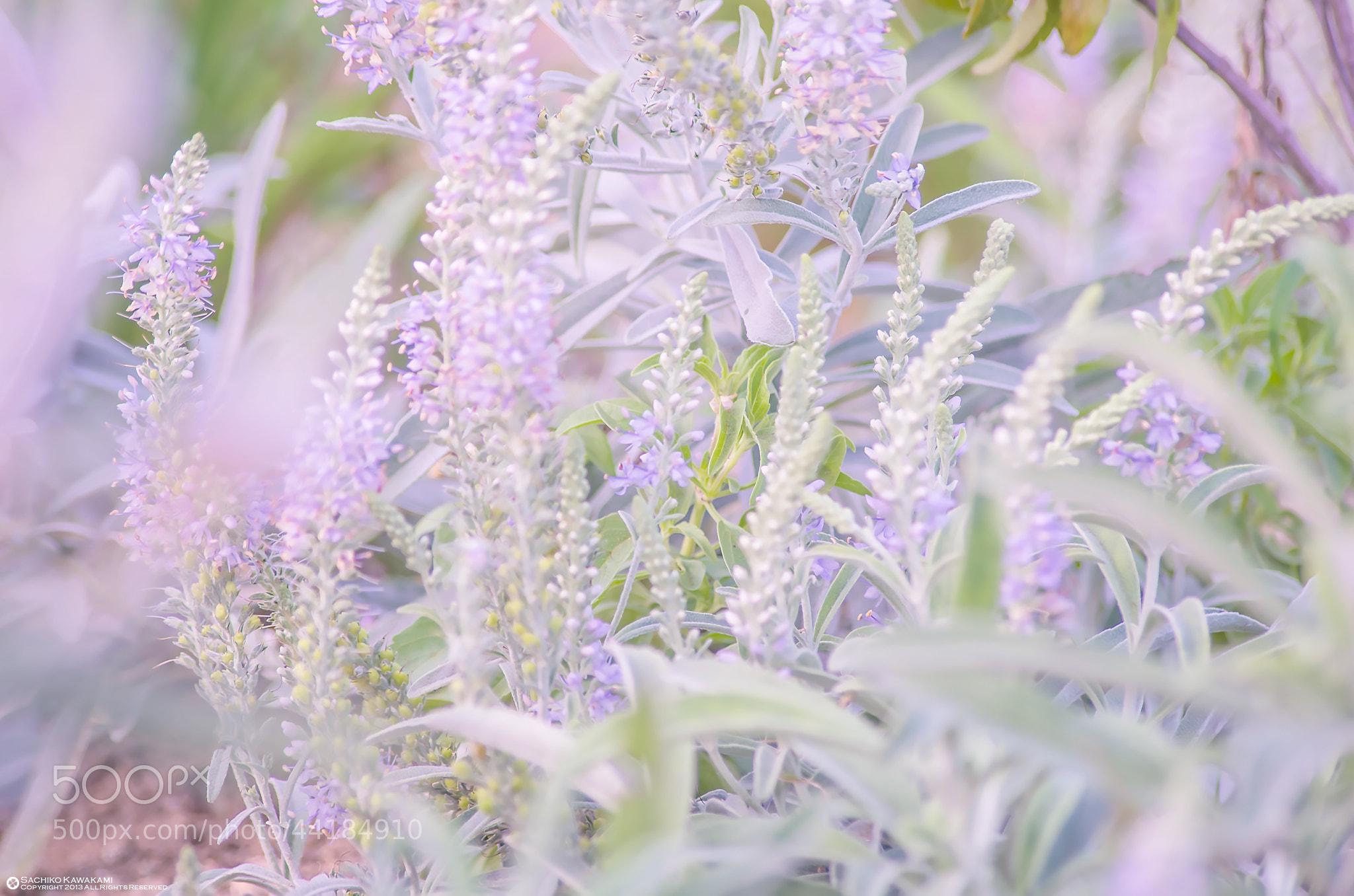 Photograph Tenderness by Sachiko Kawakami on 500px