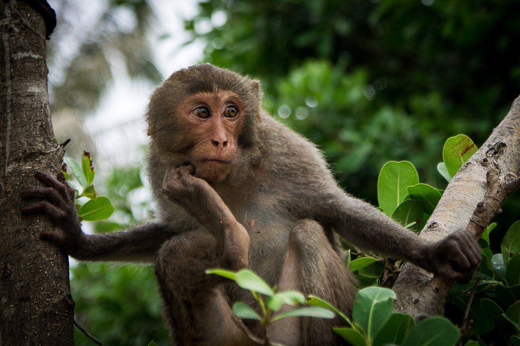Photograph Pensive monkey by Alexander Pavlov on 500px