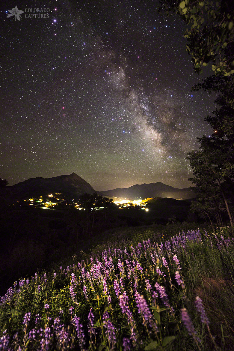 Photograph Lupine Blanket Under The Stars by Mike Berenson on 500px