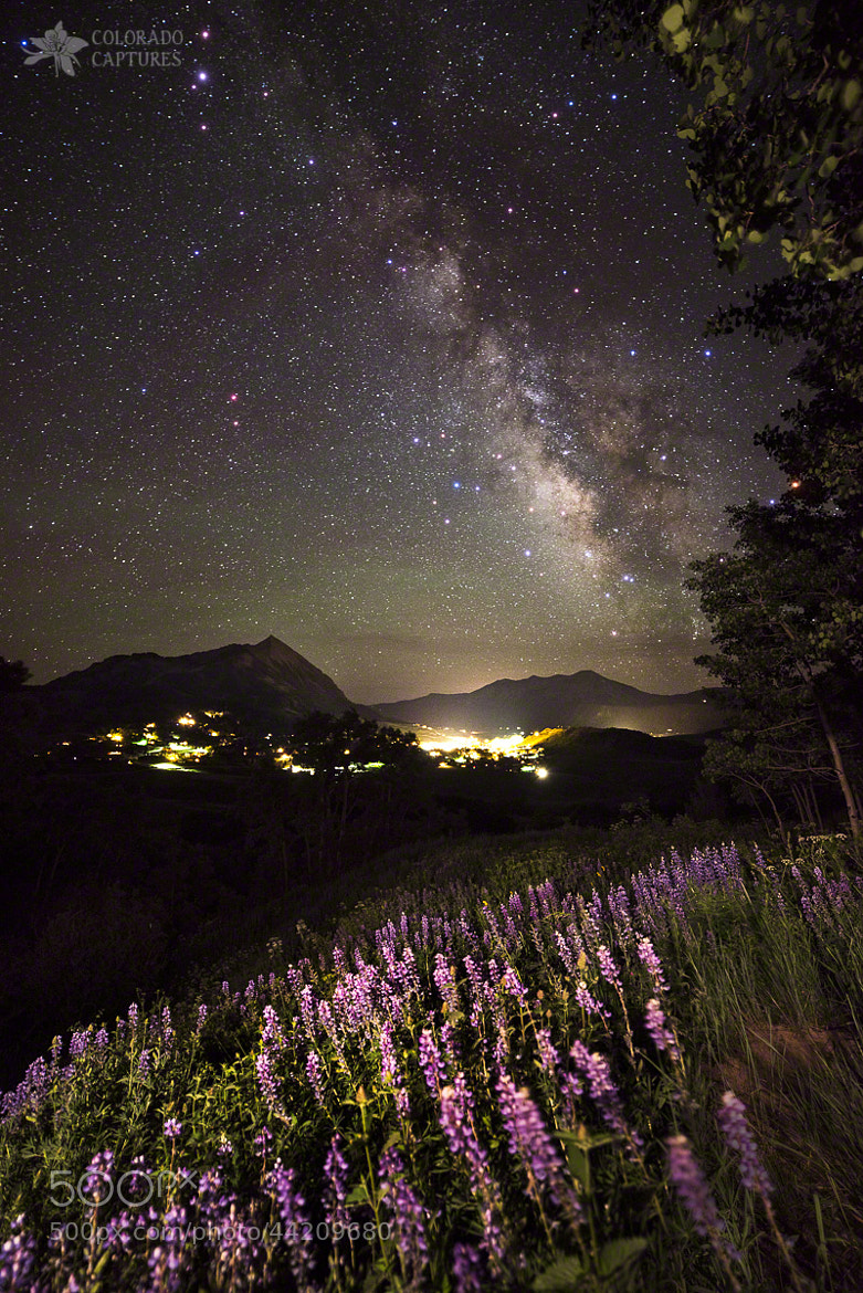 Photograph Lupine Blanket Under The Stars by Mike Berenson - Colorado Captures on 500px