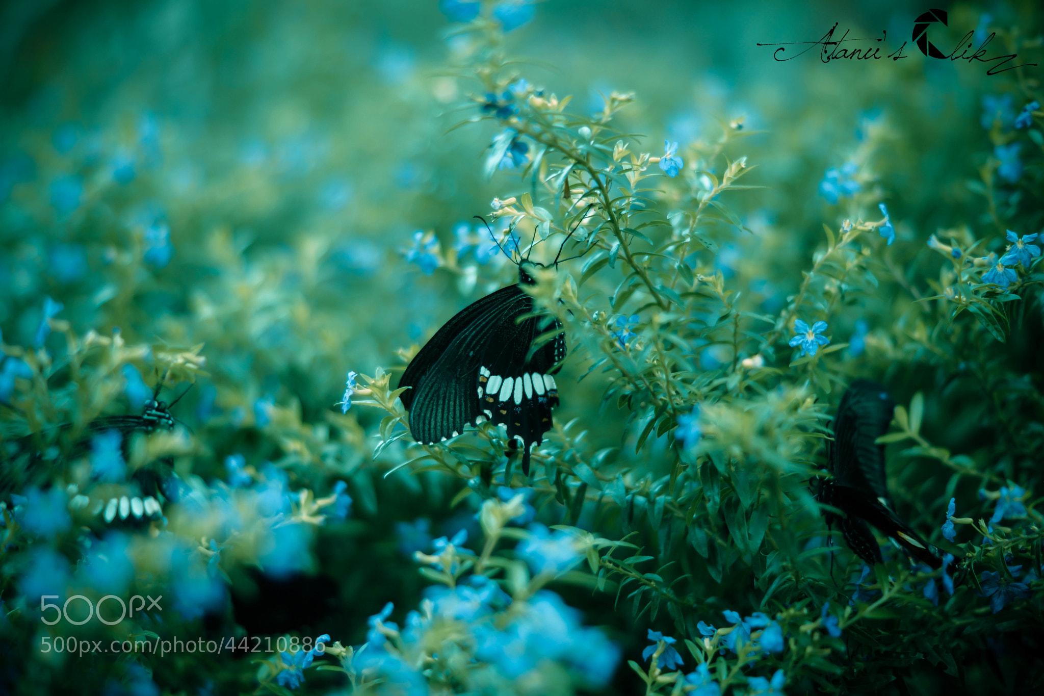 Photograph fly fly II !! by Atanu Sarkar on 500px