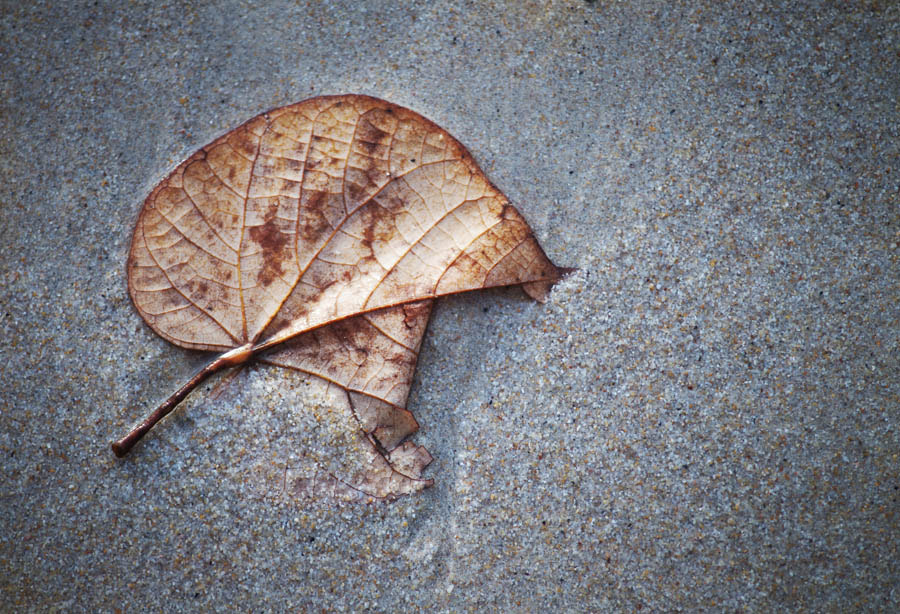 Photograph Leaf by Anton Averin on 500px