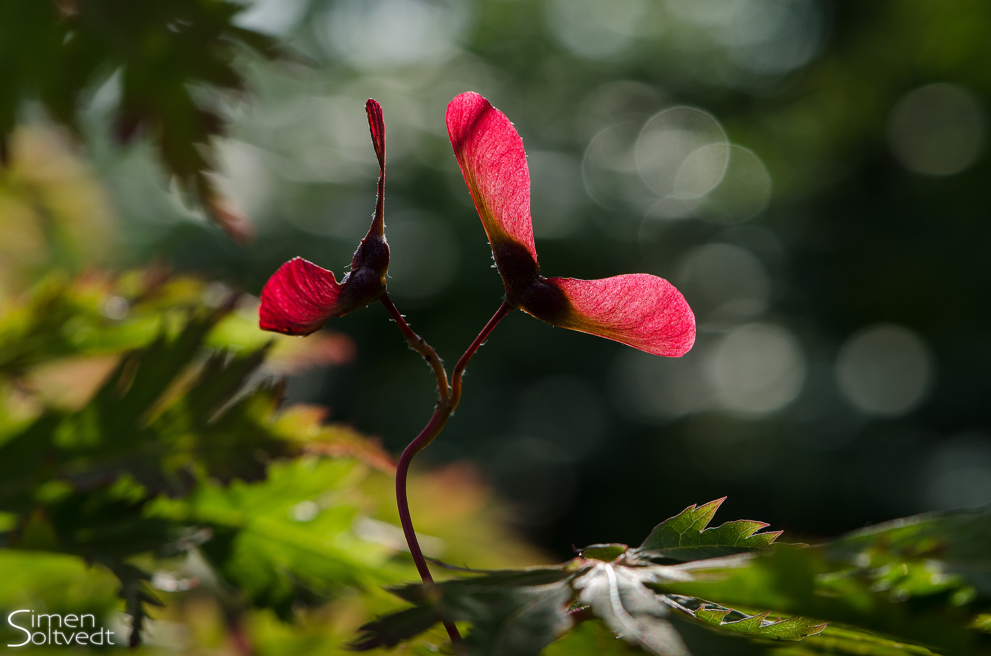 Photograph Backlit seed by Simen Soltvedt on 500px