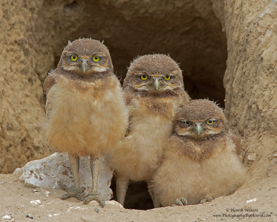 Photograph Larry, Curly and Moe by Henrik Nilsson on 500px