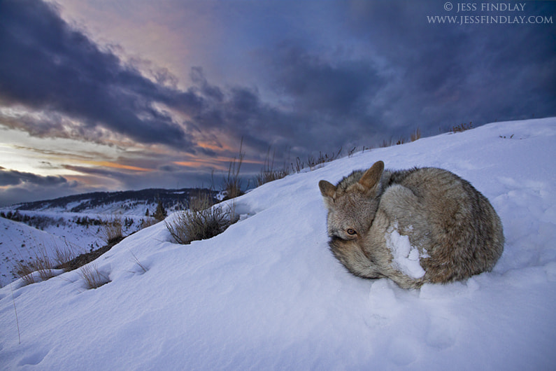 Sunset Slumber by Jess Findlay on 500px.com