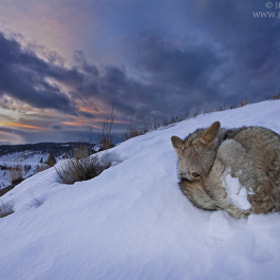 Sunset Slumber by Jess Findlay (jessfindlay)) on 500px.com