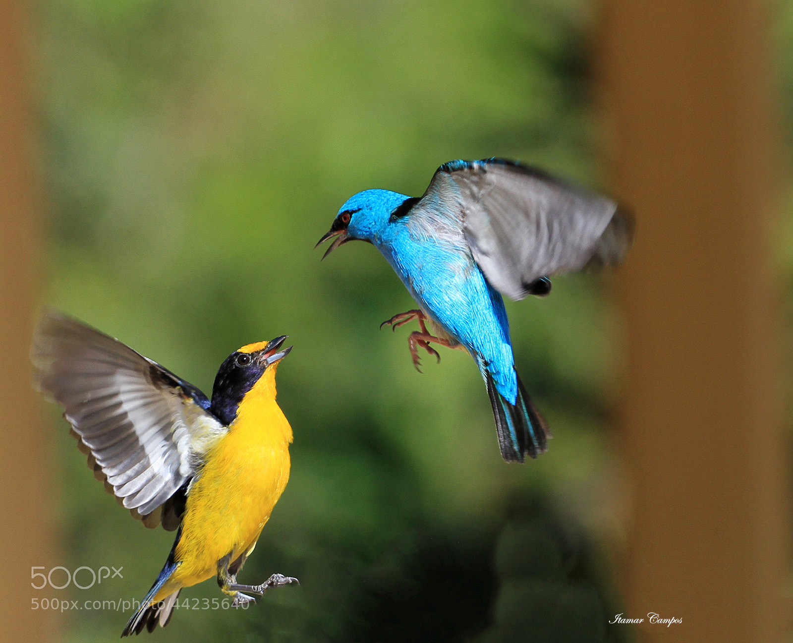Photograph Yellow and blue! by Itamar Campos on 500px