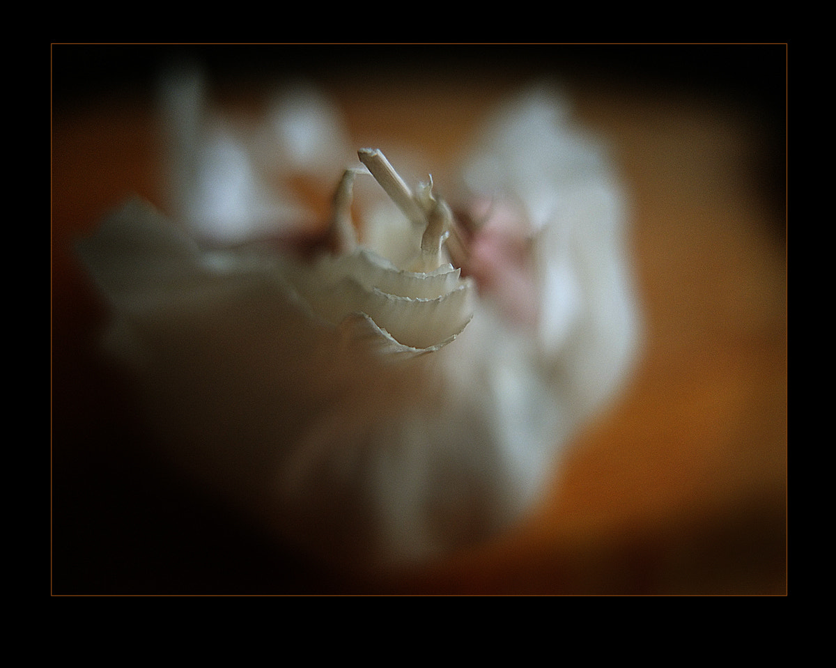 Photograph Is the end of garlic? by Tim Burt on 500px