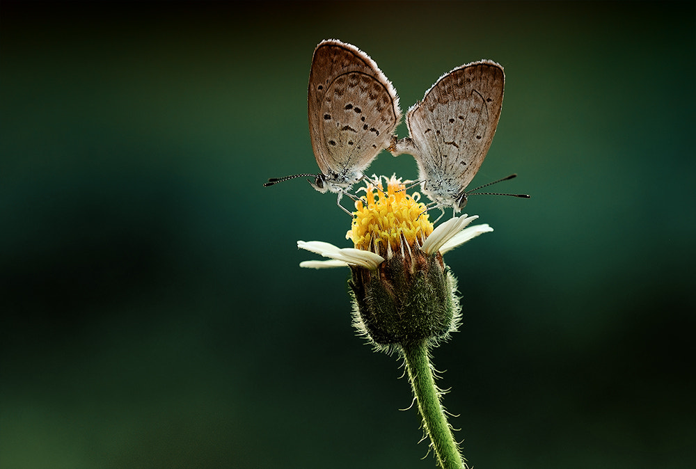 Photograph Untitled by yulian amin on 500px